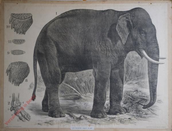 12 [2e druk] - Indischer Elefant [Herschilderd]