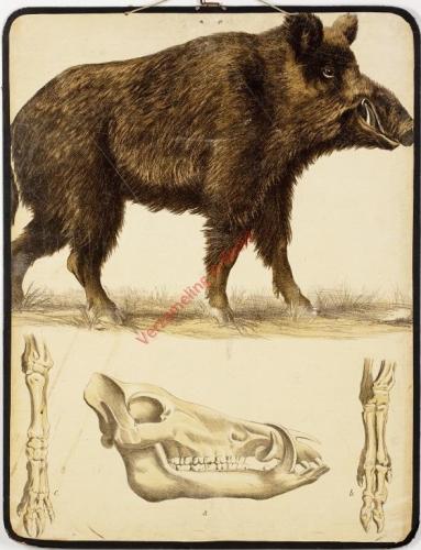 13 [1e druk] - Wildschwein