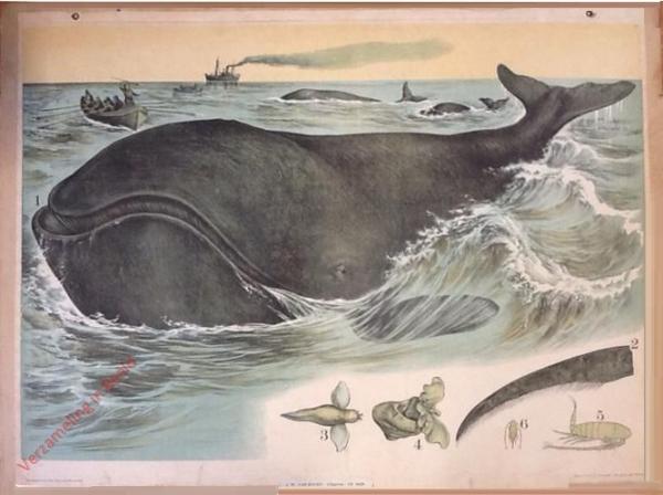 37 [2e druk] - Walfisch [Herschilderd]