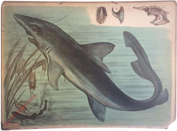 41 [2e druk] - Haifisch [Herschilderd]