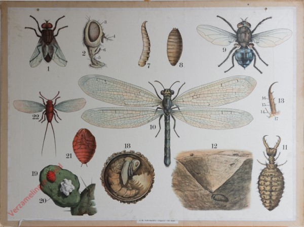 44 [2e druk] - Stubenfliege, Schmeissfliege, Ameisenlöwe [Vliegenkop links]