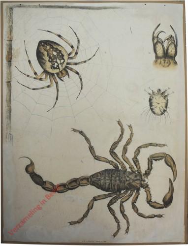 46 [1e druk] - Kreuzspinne, Krätzmilbe, Skorpion [Zonder achtergrond]