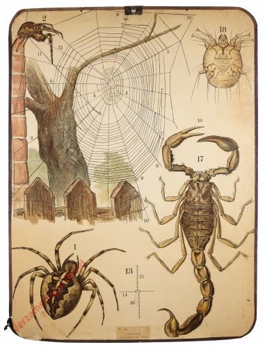 46 [2e druk] - Kreuzspinne, Krätzmilbe, Skorpion [Met achtergrond]