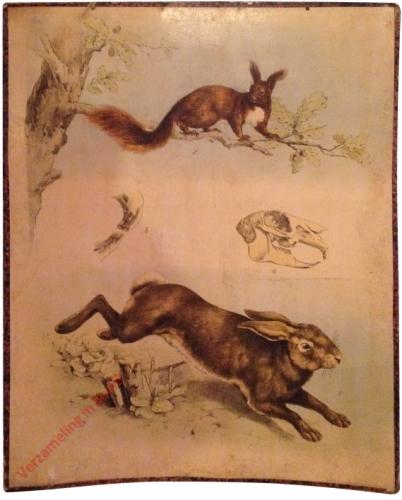52 [1e druk] - Hase, Eichhörnchen