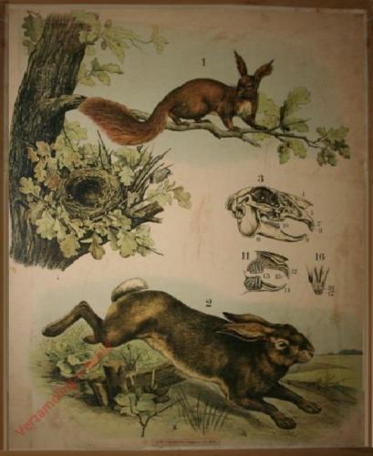 52 [2e druk] - Hase, Eichhörnchen [Herschilderd]