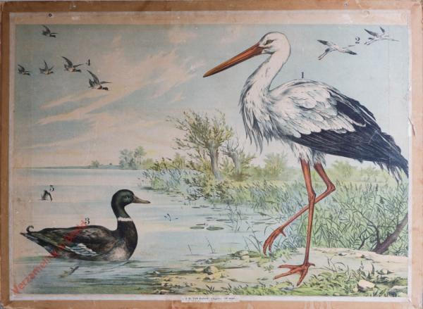 54 [2e druk] - Storch, Wildente [Herschilderd]