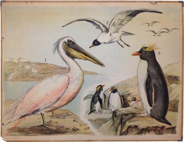 55 [2e druk] - Pelikan, Möwe, Pinguin [Herschilderd]