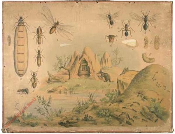 57 [1e druk] - Kote Waldameise, Termite [Doorsnede heuvel midden]