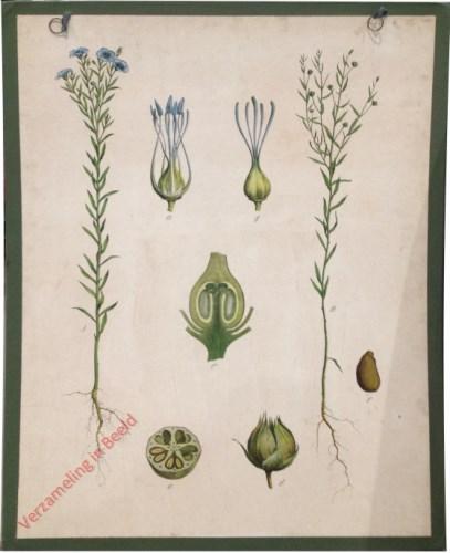 19 - Gebauter Lein (Flachs)