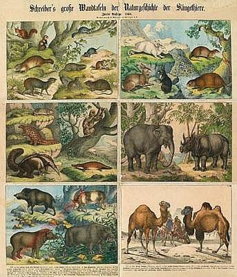 I-3 - Säugetiere, XIII-XVIII