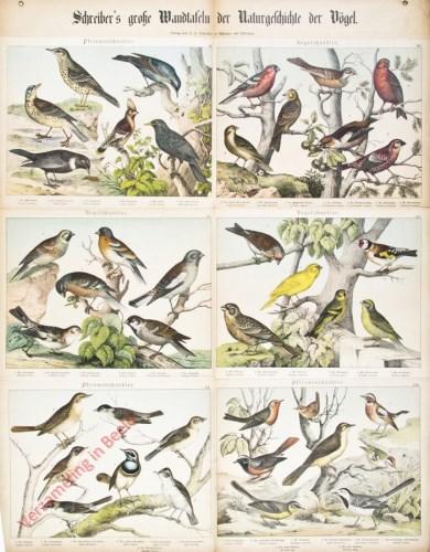 II-3 - Vögel, XIII-XVIII
