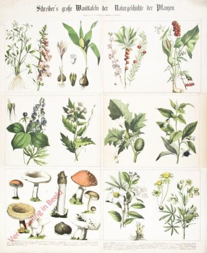 IV-1 - Pflanzen, I-VI
