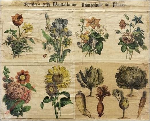 IV-2 - Pflanzen, VII-XII