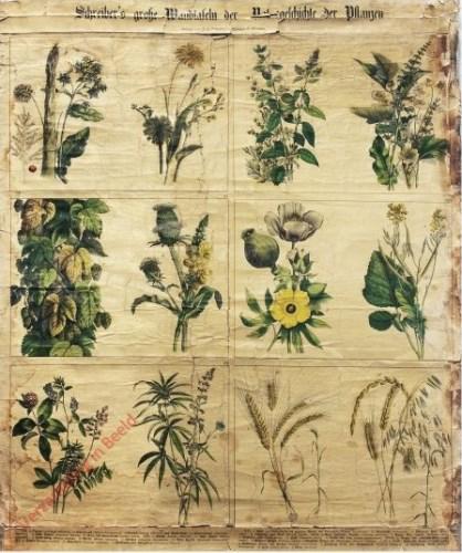 IV-3 - Pflanzen, XIII-XVIII