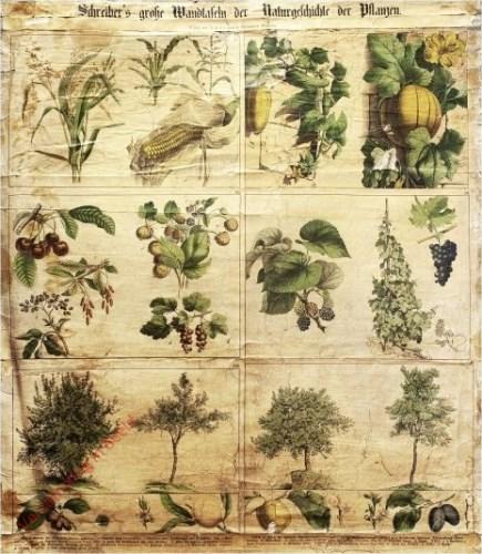 IV-4 - Pflanzen, XIX-XXIV