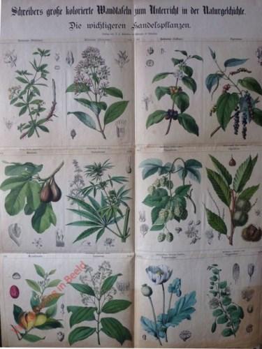 VIII-1? - Die wichtigeren Handelspflanzen, I-VI