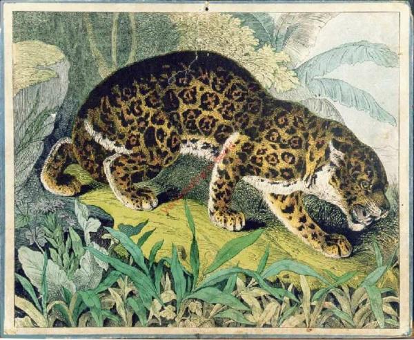 233 - Leopard