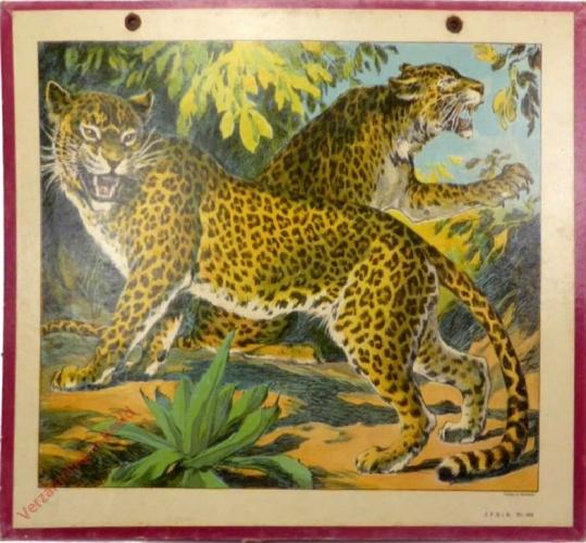233 - Leopard [herschilderd]