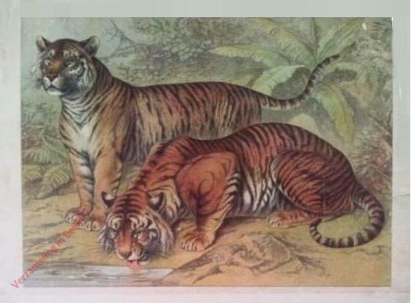 Tiger [herschilderd]