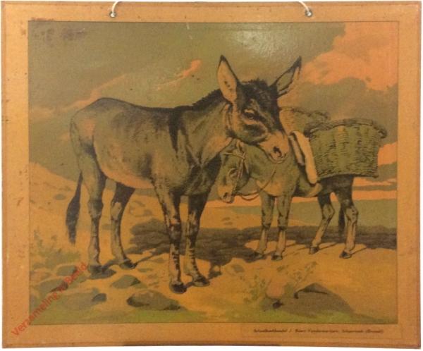 Esel [herschilderd]