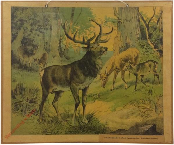 Hirsch [herschilderd]