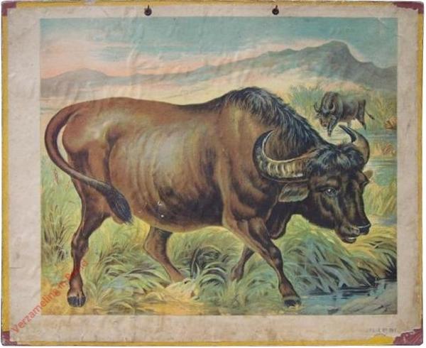 Wasserbüffel (2) [herschilderd]