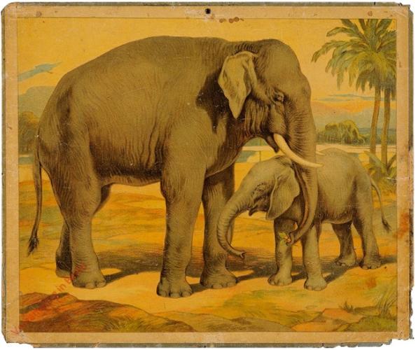Indischer Elefant [herschilderd]