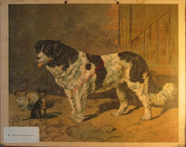 Bernhardiner, u.a. Hunden