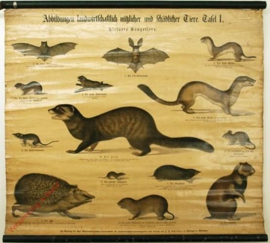 Tafel I - Kleinere Säugetiere