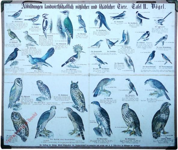 Tafel II - Vögel