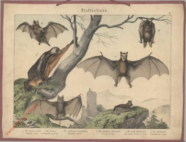 IV [1886] - Flattertiere [Vleermuis rechtsboven ingeklapt]