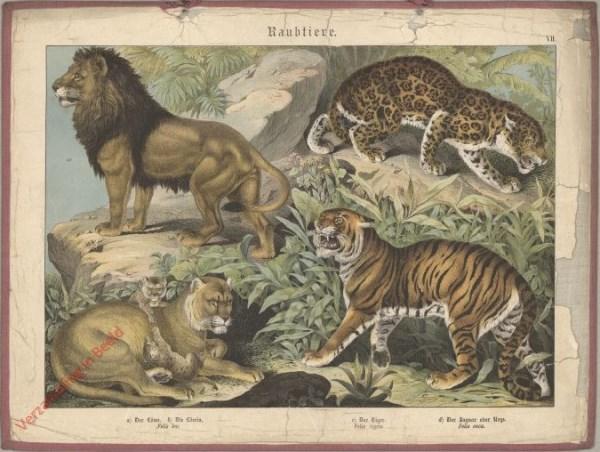 VII [1886] - Raubtiere, Löwe, Tiger, Jaguar