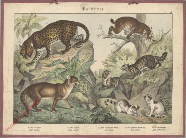 VIII [1886] - Raubtiere, [Kat, Lynx]