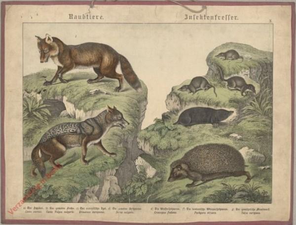 X [1886] - Raubtiere, Insectenfresser. Schakal, Fuchs, Igel, Maulwurf
