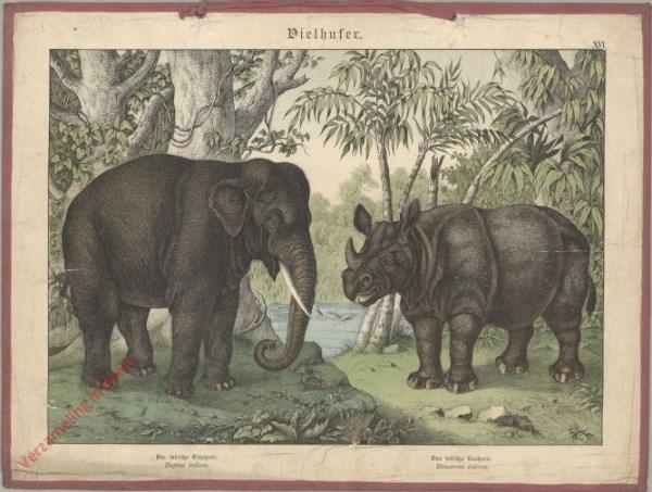 XVI [1886] - Vielhufer. Der Indischer Elefant, Der Indischer Nasehorn [onderkin neushoorn boven waterspiegel]