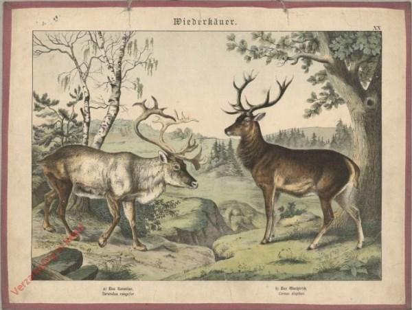 XX [1886] - Wiederkäuer. [Evenhoevigen]. [Rendier, edelhert]
