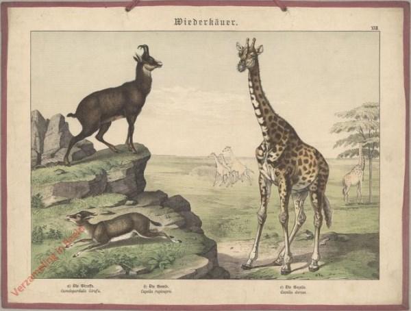 XXII [1886] - Wiederkäuer. Giraffe, Gems, Gazet [Giraffe kijkt naar links]