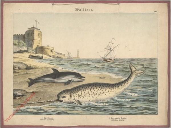 XXX [1886] - Waltiere. Der Narwal, Der Dolphin  [zonder berg rechtsachter]