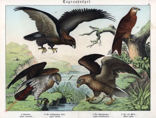II [1886] - Tagraubvögel. Adler, Rote Milan