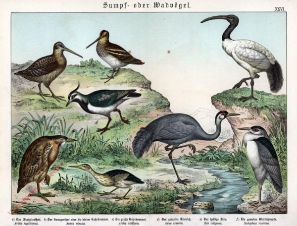 XXVI [1886] - Sumpf- oder Wadvögel