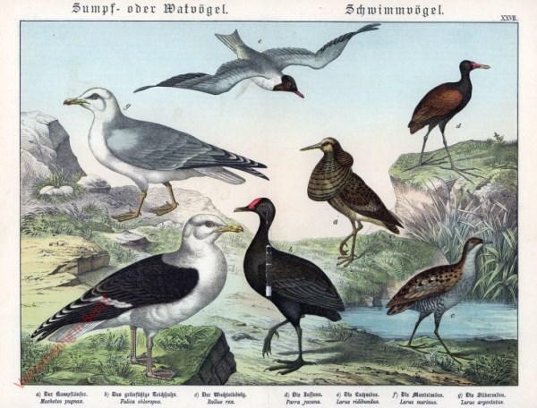 XXVII [1886] - Sumpf- oder Wadvögel, Schwimmvögel