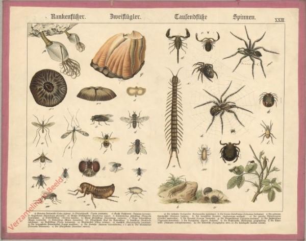 XXIII [1886] - Rankenfüsser, Zweiflügler, Tausendfüsse, Spinnen