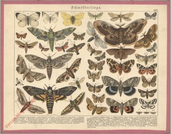 XXVI [1886] - Schmetterlinge