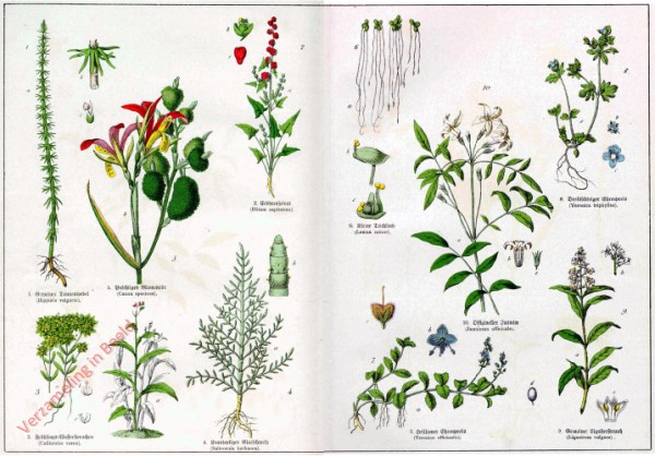 I - [Diverse planten]