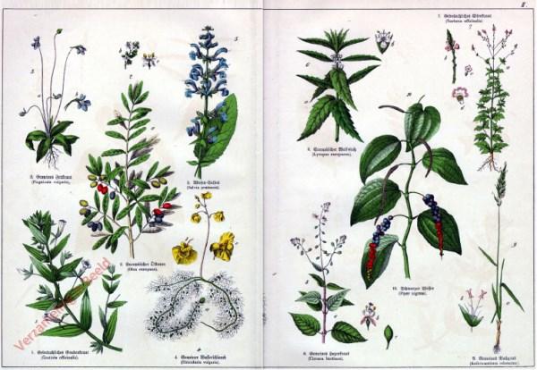 II - [Diverse planten]