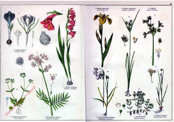 III - [Diverse planten]