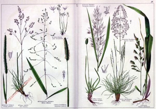 IV - [Diverse planten]