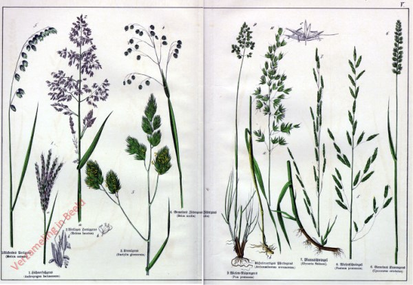V - [Diverse planten]