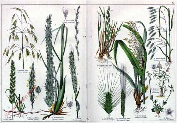 VI - [Diverse planten]
