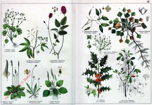 VIII - [Diverse planten]